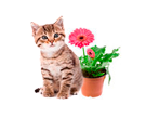 Животные и растения